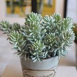 Turelifes Cactus artificiel réaliste