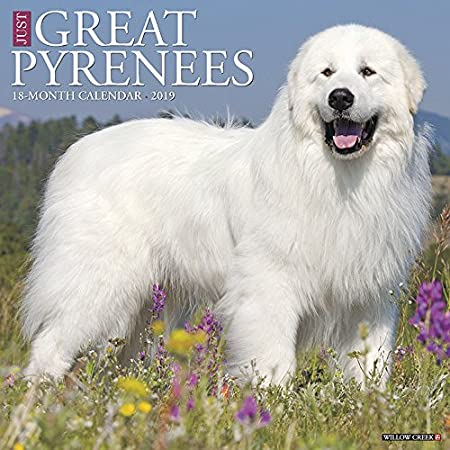 Just Great Pyrenees 2019 Wall Calendar (Dog Breed Calendar) Willow Creek Press 1549201336 Calendars NON-CLASSIFIABLE