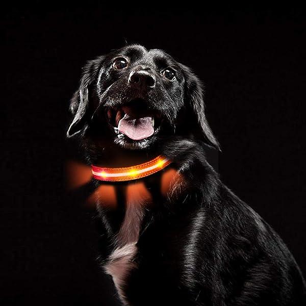 Hundehalsbands