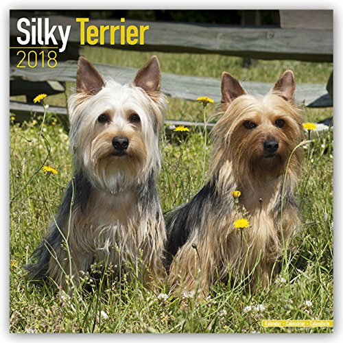 Silky Terrier Calendar - Dog Breed Calendars - 2017-2018 wall Calendars - 16 Month by Avonside