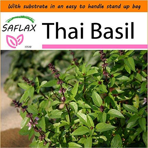 Basil Garden In A Bag - 3