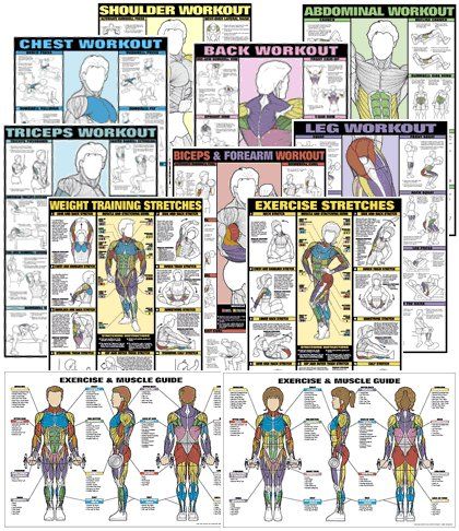 Set of Fitnus Chart Series II NFC1 Thru NFC13 24'' X 36'' Laminated (Set of 13)