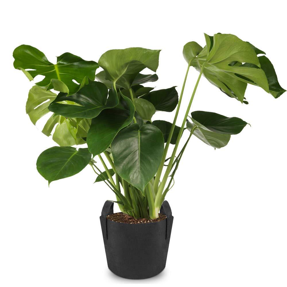 Primematik Sac Jardiniere Pour Plantes En Croissance Pot De Tissu