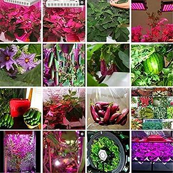 Jimfoty Grow Plant Light 1Pc 50W Full Spectrum Sunlight Warm//White Led Cob Chip Grow Light Growth Lamp Garden Hydroponic Plant