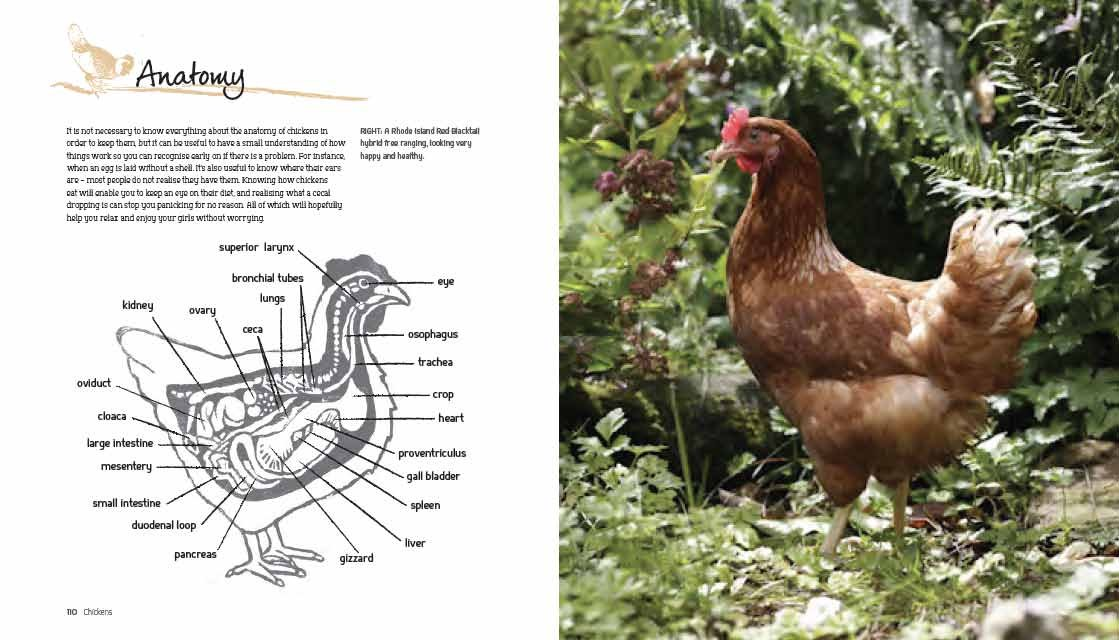Chickens: The Essential Guide to Choosing and Keeping Happy, Healthy ...