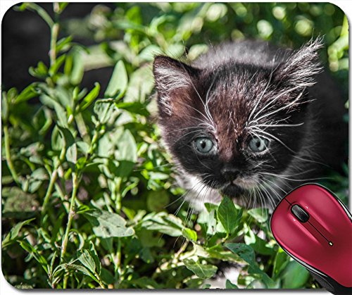 Liili Mousepad Small black kitten lit by sun rays Photo - Sun Free Ray Pictures