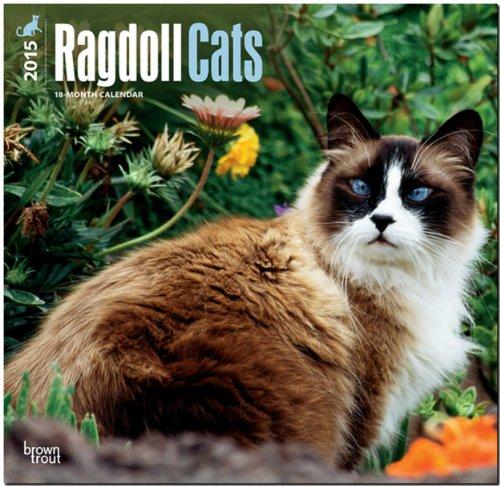Ragdoll Cats 2015 Square 12x12