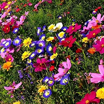 Humany flowerseeds- Wildflowers Mix Butterflies and Bees' Perennial Flower Mix - Flower Meadow, Rare Wildflower Seeds Winter Perennial hardyWildflowers & Herbs Mix : Garden & Outdoor