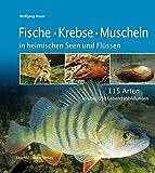 Fische Krebse Muscheln in heimischen Seen und Flüssen: 115 Arten in über 350 Lebendabbildungen