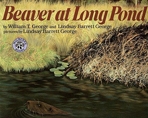 Download Beaver at Long Pond pdf epub