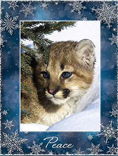 Eyes of Blue Christmas Cards (Eyes Angel Cards Greeting)