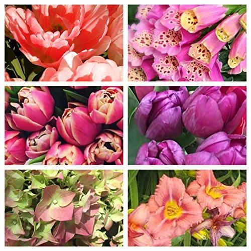 Tulip Combo - 3