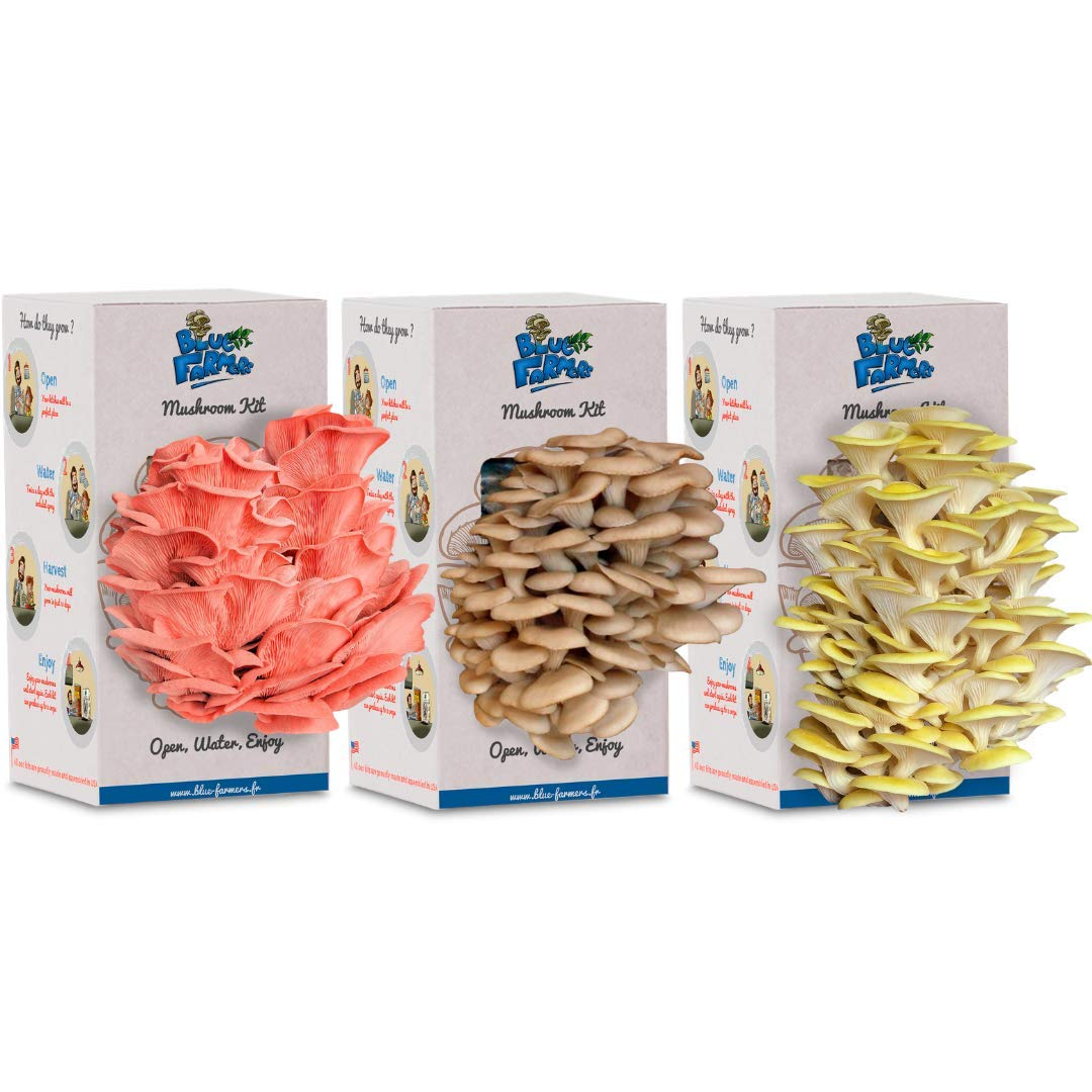 Blue Farmers | Mushroom Growing Kit | Oyster Mushrooms Grow Kit | Grey, Pink and Yellow Oyster Mushrooms | Grows in 10 Days | Top Christmas Gift | Top Gardening Gift | Original Gift | Mushrooms