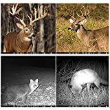 Trail Camera - Distianert Trail Game Camera Wildlife Hunting Camera with Infrared Night Vision, 36pcs 940nm IR LEDs, 2.0-inch LCD Screen, IP65 Waterproof