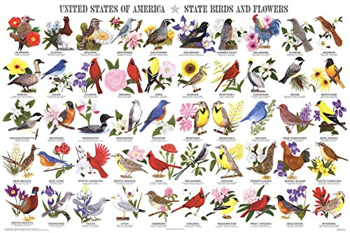 State Birds and Flowers Educational Chart Poster 36 x 24in (State And Flowers Birds)