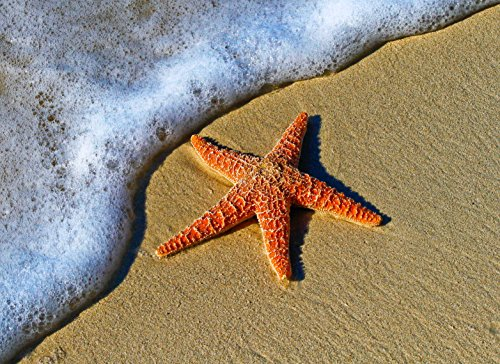 Adult Jigsaw Puzzle Starfish Sand Sea Beach 500-Pieces