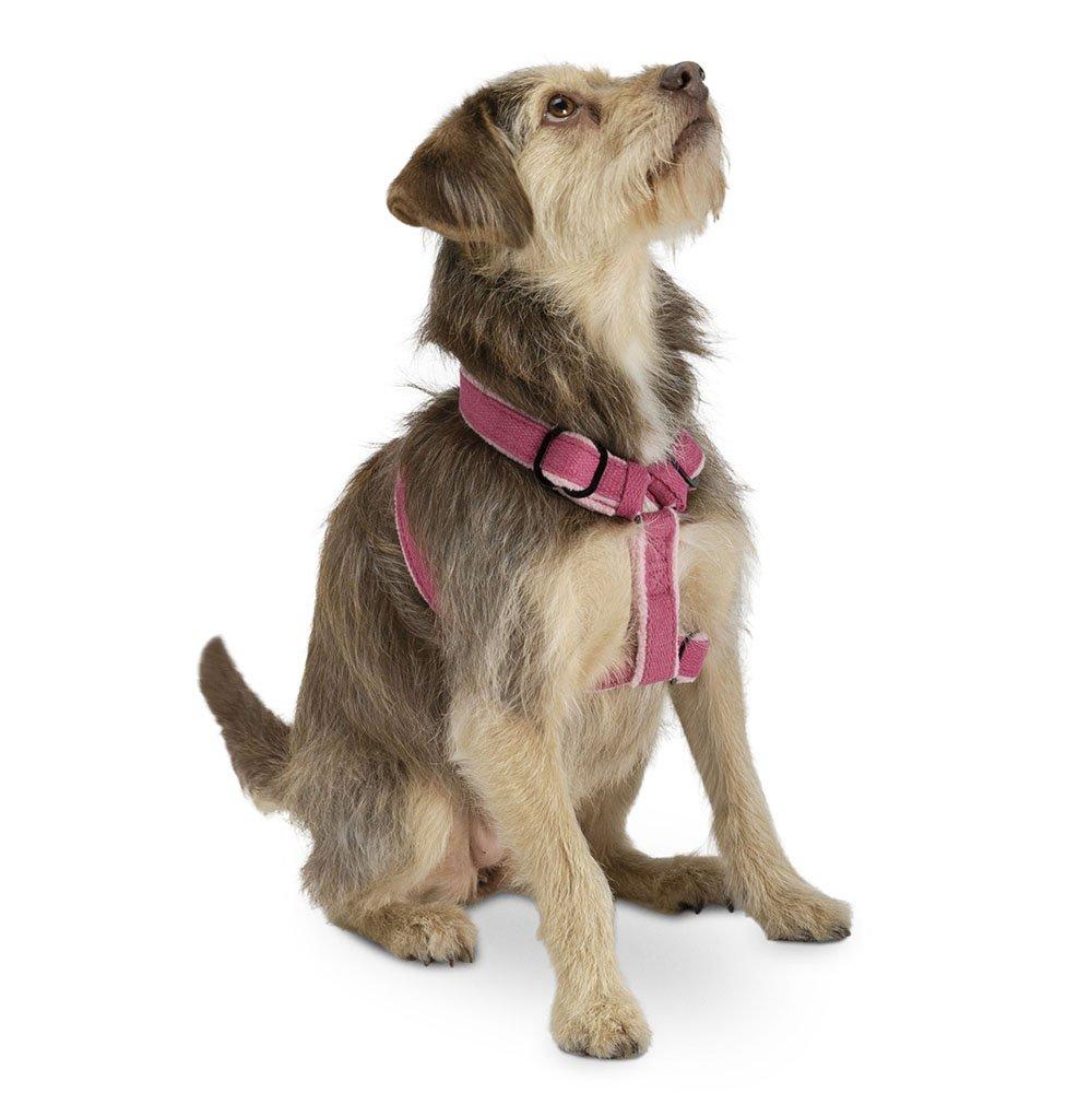 Planet Dog Cozy Hemp Adjustable Dog Harness, Blue, Small forecasting