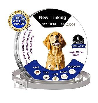 ProHomer - Cuello de Control de plagas, Impermeable, para Perro, antipulgas para 8 Meses (63 cm), Color Gris: Amazon.es: Productos para mascotas