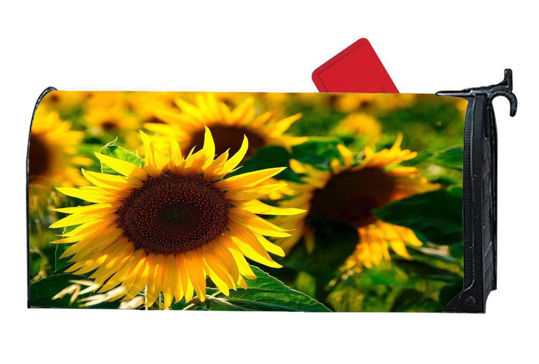 Sunflower Backlighting Yellow Flower