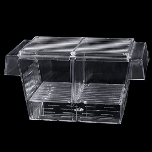 Amazon.com : eDealMax plástico peces de acuario tanque de camarón Criador criadero Box Cría de casos 2pcs : Pet Supplies