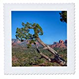 3dRose Danita Delimont - Deserts - Arizona, Sedona, Red Rock Country, Juniper tree and Cathedral Rock - 22x22 inch quilt square (qs_258714_9)