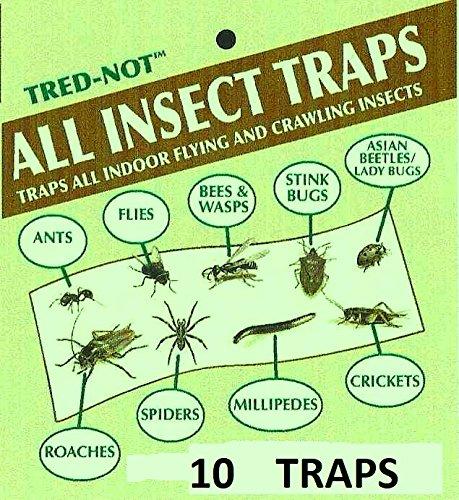 10 Pk Camel Cricket / Roach / Scorpion STICKY TRAPS