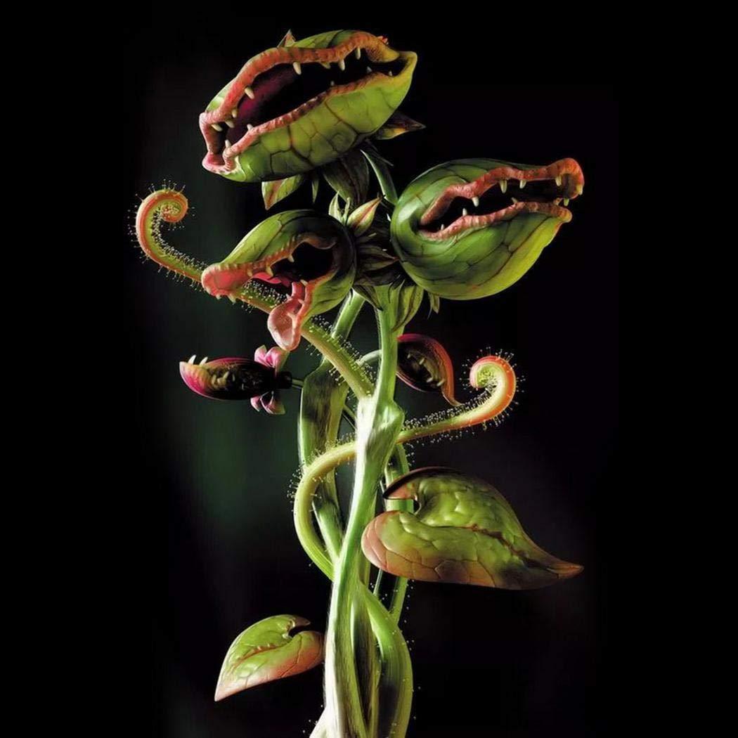 fleischfressende Pflanze Zimmerpflanzen f/ür Fenster Balkon Keland Garten Lila//Gr/ün//Blau//Gelb//Rot Dionaea muscipula Selten 50//100 St/ück Selten Blau Venusfliegenfalle Samen