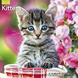 2018 Kittens Wall Calendar (Mead)