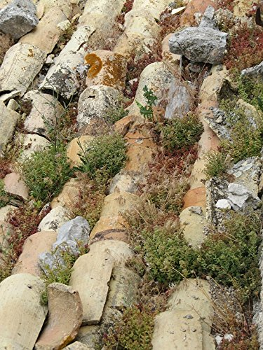 Sedum Green Roof - Home Comforts LAMINATED POSTER Sedum Roof Tiles Old Moss Succulents Green France Poster 24x16 Adhesive Decal