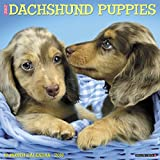 Just Dachshund Puppies 2018 Wall Calendar (Dog Breed Calendar)