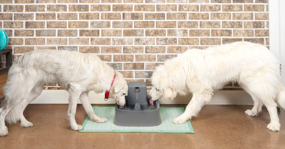 perros bebiendo en dispensador de agua bebedero doble automático grande de color gris