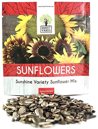 Sunflower Variety Mix 10 Types of Beautiful Sunflowers - Bulk 1 Ounce Packet - Open Pollinated Sunflower Seeds ()