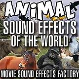 Cricket Sound Effects