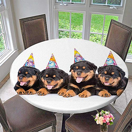 Round Tablecloth for Kids Rottweiler Puppies with Party Cone Hats Art Print Black and Marigold for Kitchen 55