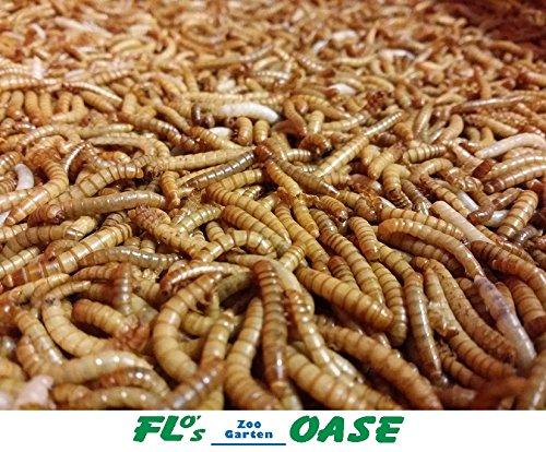 Mehlwürmer LEBEND 500 Gramm Futterinsekten Reptilienfutter Futtertiere Igelfutter Vogelfutter Flos-Oase