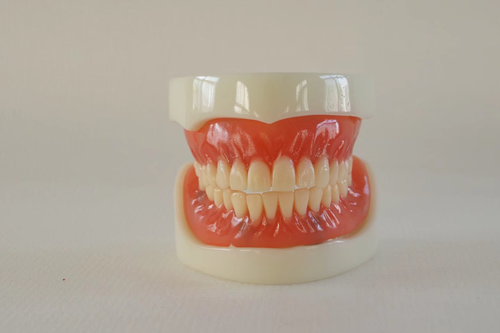 S&D Dental Stomatological Scientific and Educational Moulds Teaching Demonstration Implant Model Implant Model with Full Denture