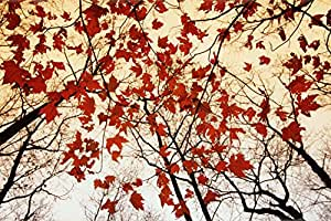 Bare Branches and Red Maple Leaves Poster 36 x 24in