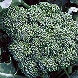 David's Garden Seeds Broccoli Calabrese EB118Q (Green) 50 Organic Heirloom Seeds