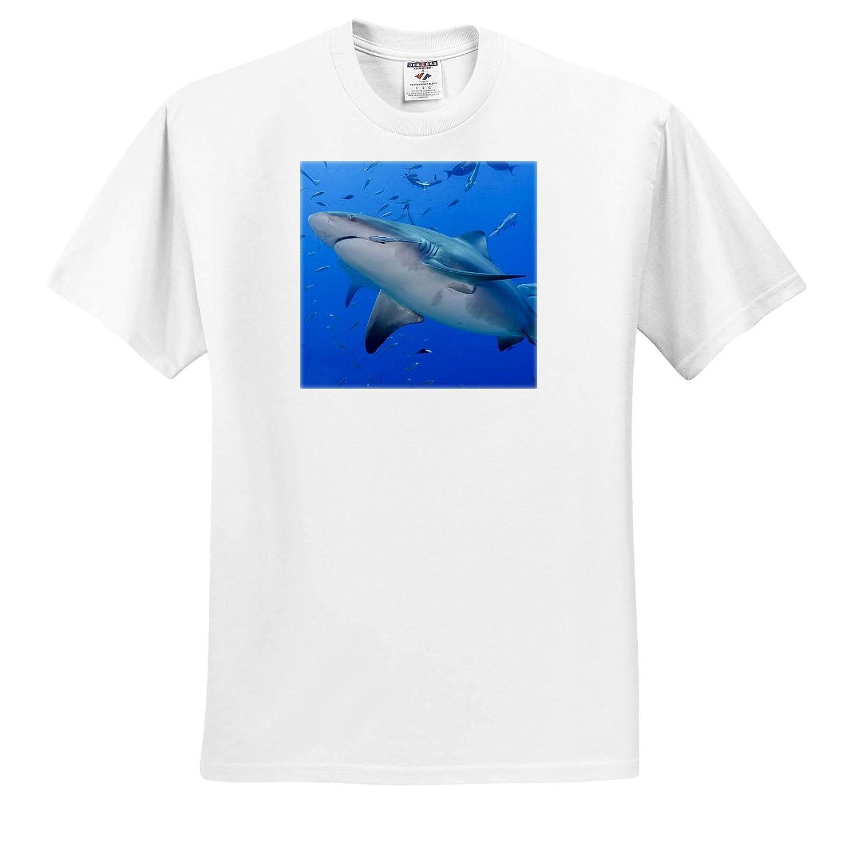 3dRose Danita Delimont - Adult T-Shirt XL ts/_314012 Close-up of Bull Sharks Fiji Fish