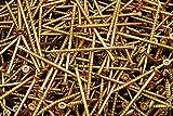 (2000) Torx T25 Star Flat Head 9 x 3 Yellow Zinc Type 17 Outdoor Wood Screw Bulk