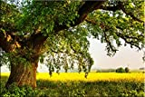 Startonight Canvas Wall Art Old Tree on the Green Field, Nature USA Design for Home Decor, Dual View Surprise Artwork Modern Framed Ready to Hang Wall Art 31.5 X 47.2 Inch 100% Original Art Painting!