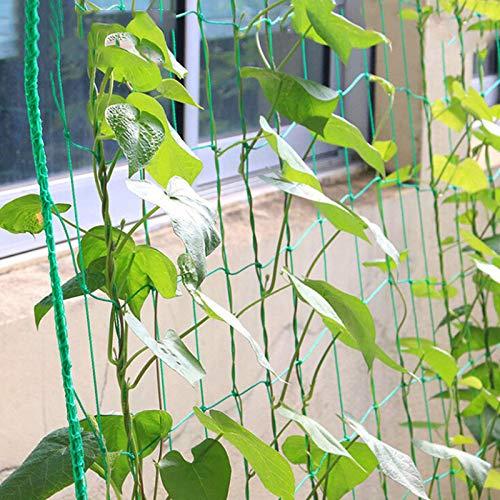 Plantes grimpantes FGASAD Filet de Support en Nylon pour Plantes v/ég/étales en Treillis pour cl/ôture de Jardin Fruits Filet de Jardinage Parfait pour lescalade des Plantes vinyles