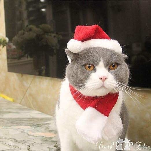 Kalolary Gorro de Gato para Mascota, Gorra de Papá Noel Ajustable para Mascota + Bufanda, para Gato y Cachorro: Amazon.es: Productos para mascotas