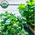 Gaea's Blessing Seeds - Cilantro Seeds 300+ Organic Seeds Non-GMO High Germination Rate Leisure Coriander Heirloom