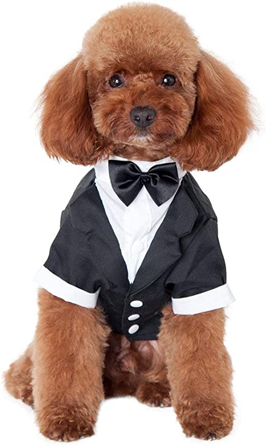 Camisa De Perro Cachorro Ropa Para Mascotas De Tamaño Pequeño/Mediano/Grande, Elegante Traje De Corbata De Lazo, Traje De Boda Esmoquin Formal Con Corbata Negra, Traje De Boda Príncipe Perro: Amazon.es: Productos para