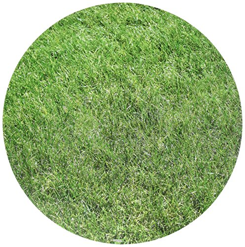 Wilton 12 in. Grass Pattern Circle Cake Board Set, 3-Ct.