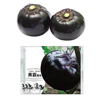 50Pcs/Pack Black Round Eggplant Seeds for Yard Gardening Plant Delicious Eggplant : Garden & Outdoor