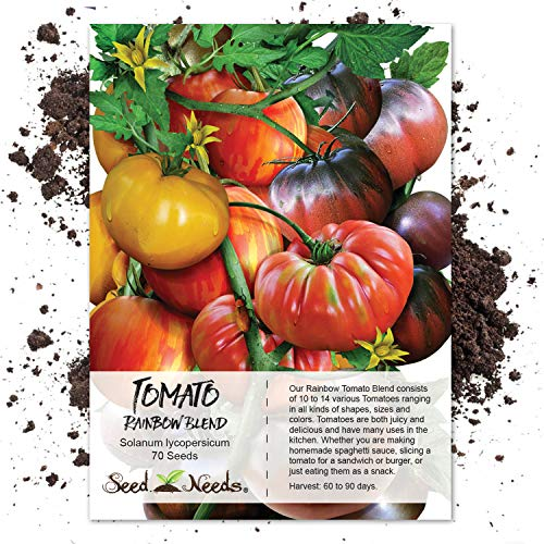 Seed Needs, Rainbow Tomato Mixture (10+ Varieties) 70 Seeds Non-GMO