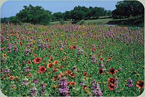 Non GMO Bulk Texas and Oklahoma Wildflower Seed Mix (1/2 Lb)
