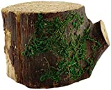 Top Collection Miniature Fairy Garden and Terrarium Statue, Decorative Mossy Tree Stump Display, 3-Inch by 3.5-Inch Review
